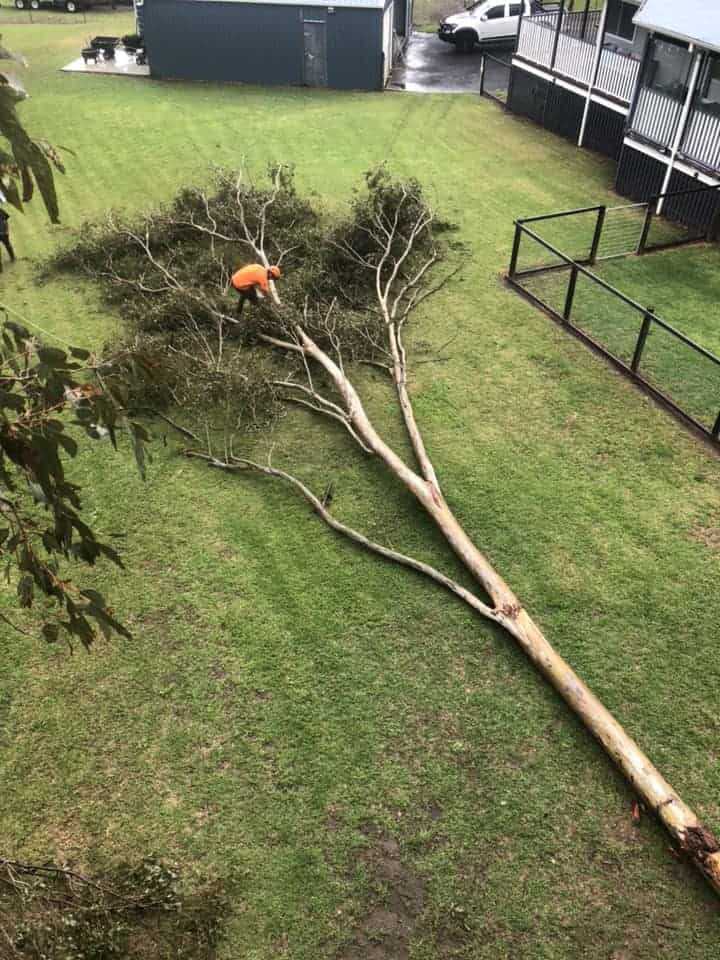 tree removal berrima