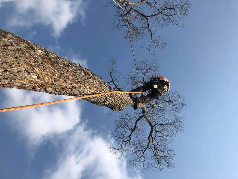 tree removal braemar nsw