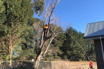 tree removal burrawang