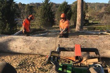 tree removal camden park