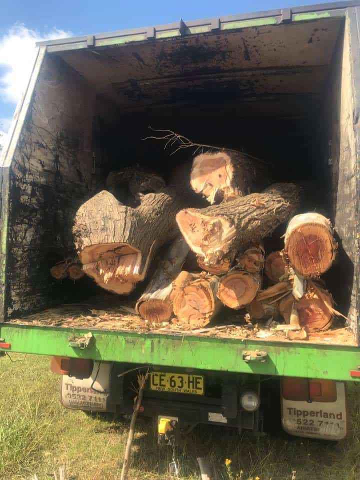 tree removal colo vale