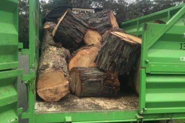 tree removal douglas park