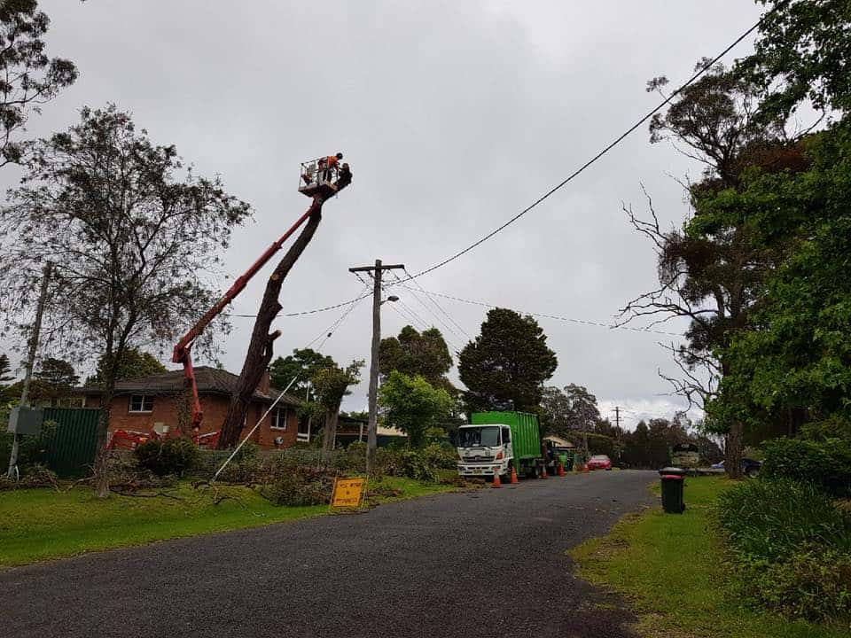 tree removal east kangaloon