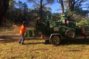 tree removal maldon