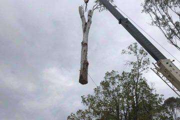 tree removal services bullio