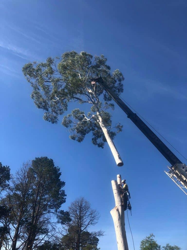 tree removal high range