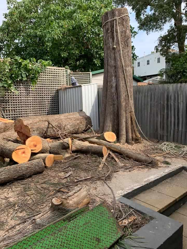 tree removal hill top