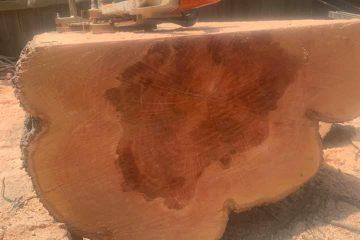 tree removal joadja