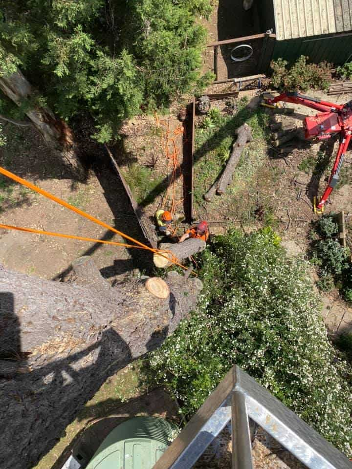 tree removal minto