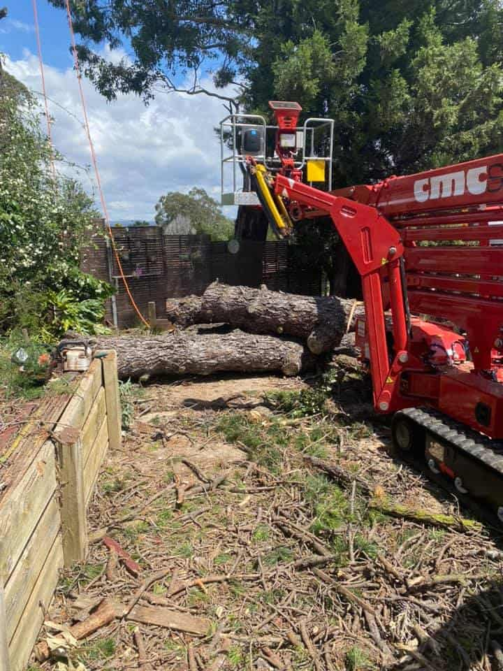 tree removal mount annan