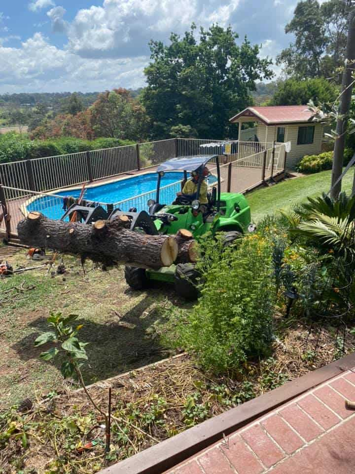 tree removal mount murray
