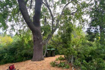 tree removal mowbray park