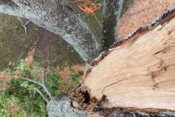 tree removal nattai