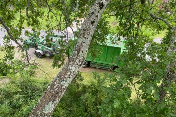 tree removal new berrima