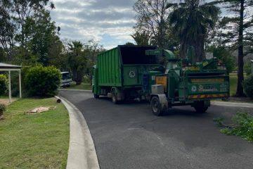 tree removal oakdale