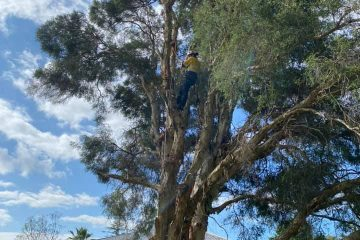 tree removal oran park