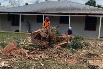 tree removal penrose