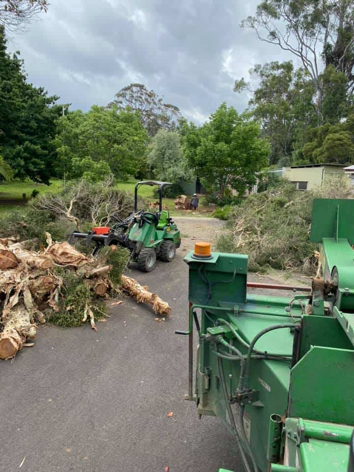 tree removal picton