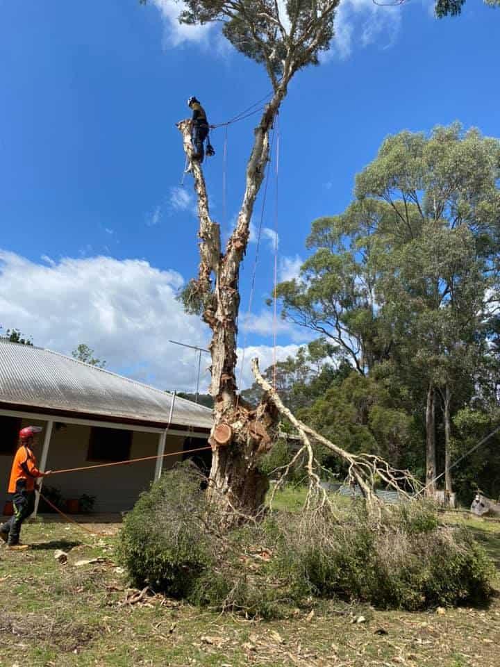 tree removal prestons
