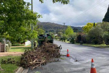 tree removal razorback