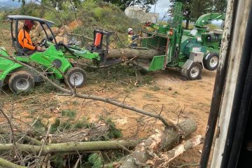 tree removal wattle ridge
