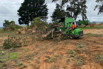 tree removal werai