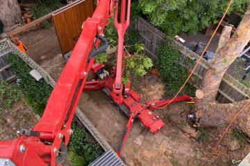 tree removal werombi