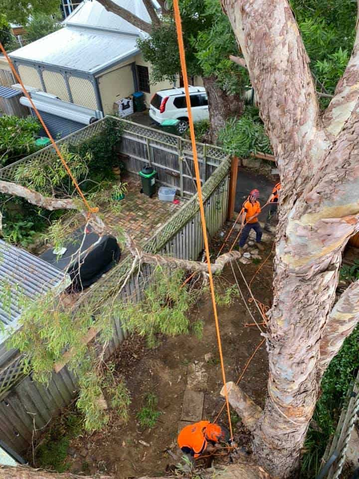tree removal wildes meadow