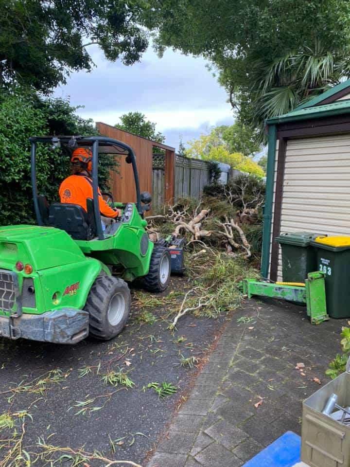 tree removal wingello