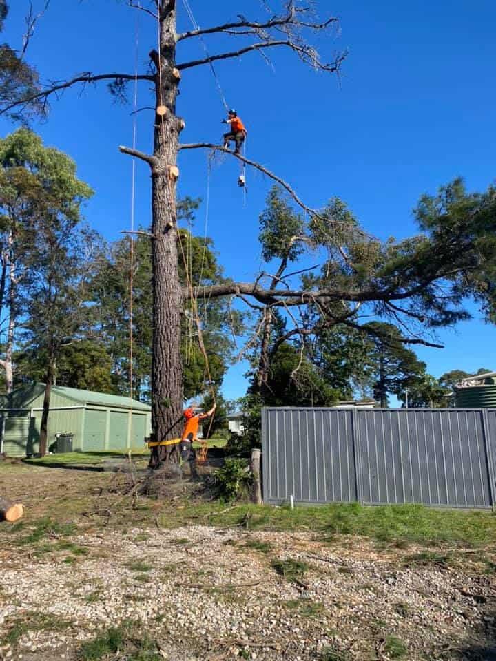 tree removal menangle
