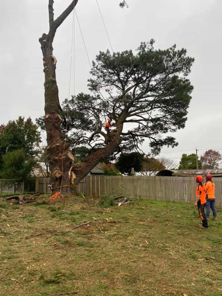 guide to tree work terminology and definitions